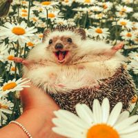 I am a hedgehog